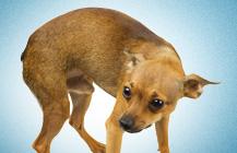 Seminars and Free Puppy Orientation